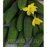 Огурец Крепышок Арт. 5400 | Семена
