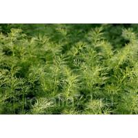 Укроп Ароматный Арт. 5201 | Семена