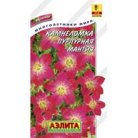 Камнеломка Пурпурная мантия  | Семена